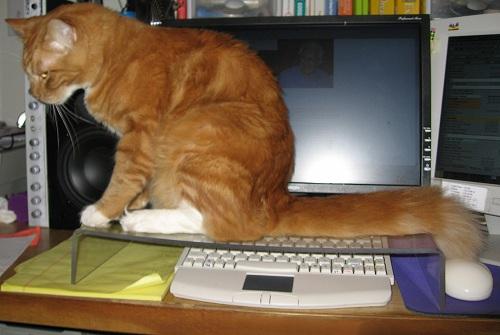 猫よけキーボードカバー