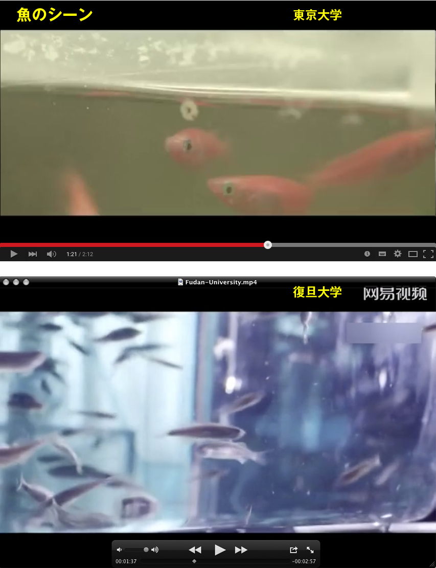 魚のシーン