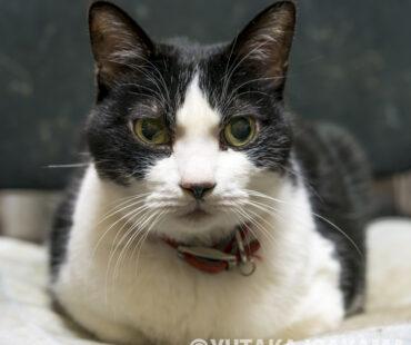 猫のナナちゃん、永眠…享年14歳