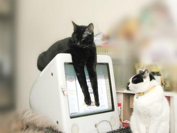 CRTディスプレイと猫