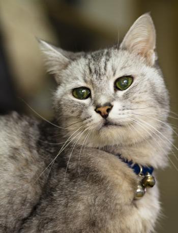 追記:photo~今日の老猫「シマ」
