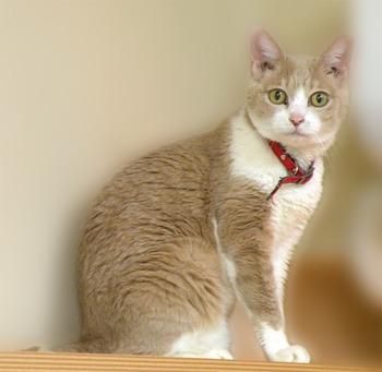 猫が乳がんに(>_<)ゞ