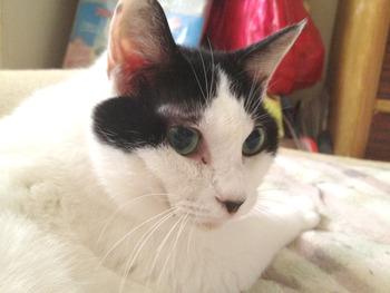 猫のタマコ、逝く。享年14歳…
