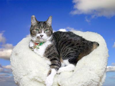 猫のプーちゃん、永眠