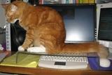 電子機器を猫から守る方法