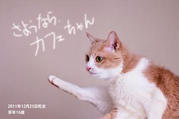 猫のカフェ、逝く。享年16歳…