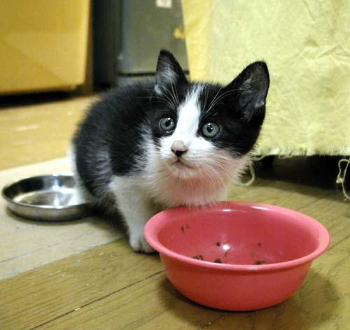 「元気に猫プロレス」