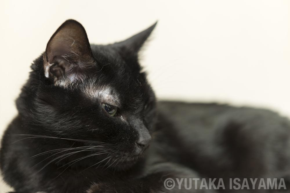 猫だって寂しいときはある…ただし理由は人間とは違う