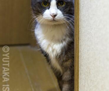 やんちゃ坊主(猫)のカール、11歳で逝く