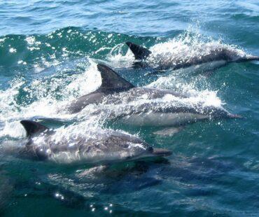 海洋惑星にも生命誕生の可能性