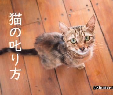 猫の叱り方