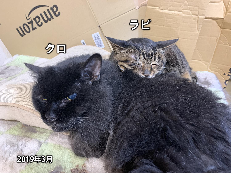 猫のクロちゃん、14歳で永眠