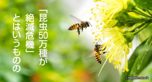 「昆虫50万種が絶滅危機」 とはいうものの