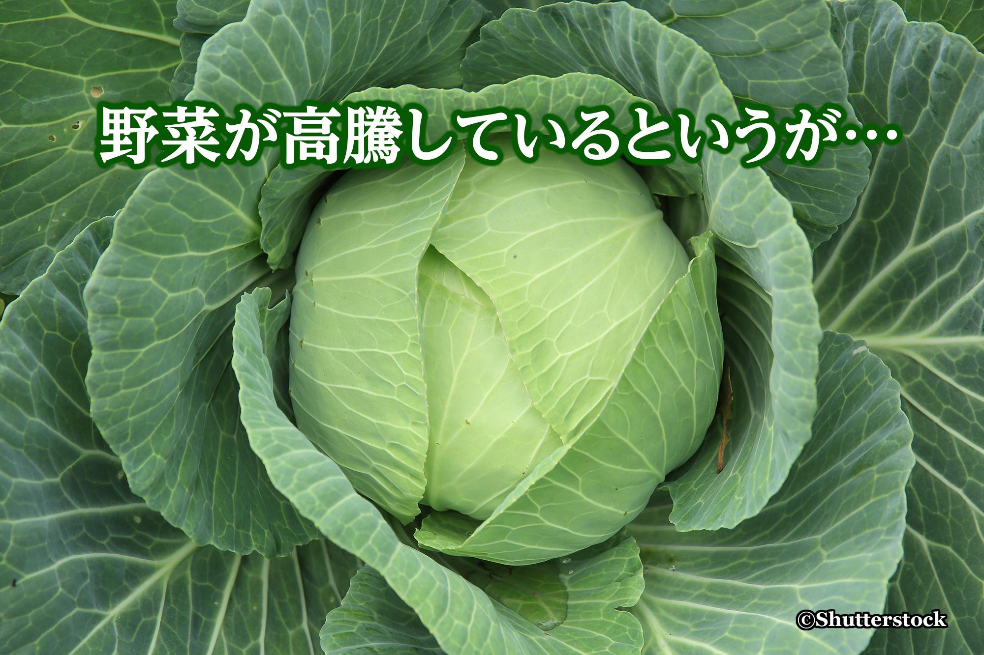 野菜が高騰しているというが…